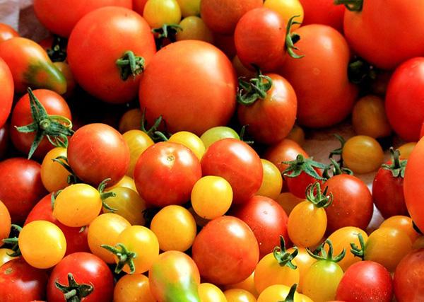 Difference Macronutrients between micronutrients