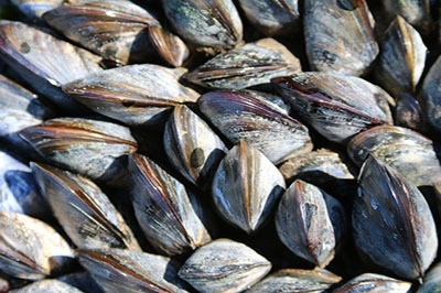 Mussels reduce anxiety