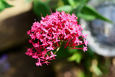 valerian for anxiety