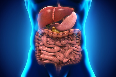 Microbiome and digestive health
