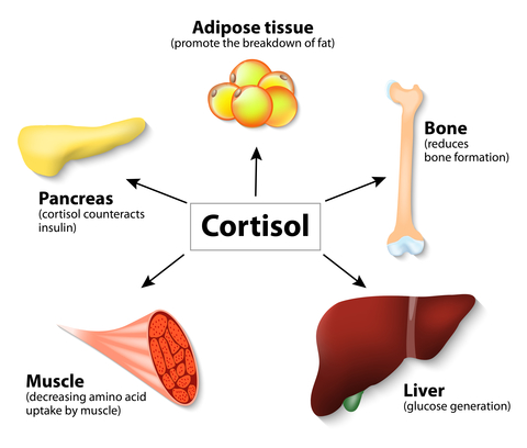 The effects of elevated Cortisol