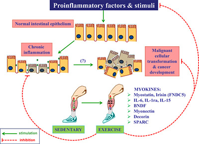 Strength training reduces inflammation