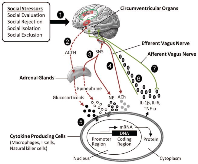 Mechanisms of depression