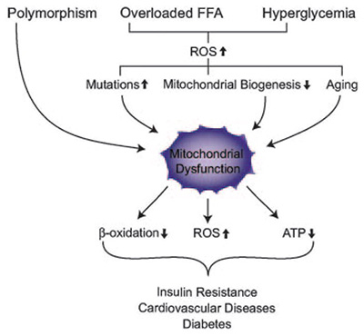 Metabolic flexibility and weight gain