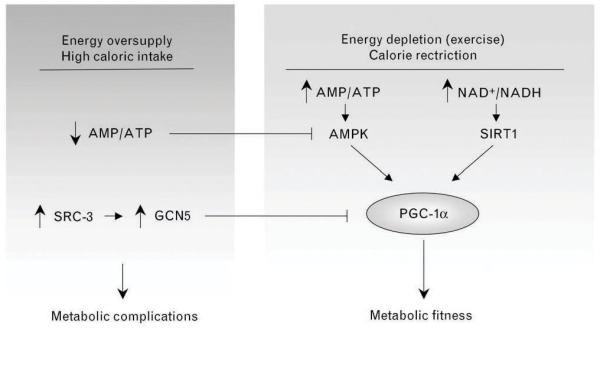 Metabolic Flexibility and fatigue
